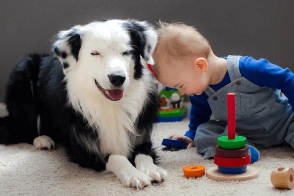 Ребенок и большая собака на ковре